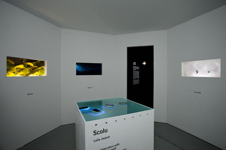 Peep Show, Fishes and Other Objects of Desire (photo Sandra Pointet)